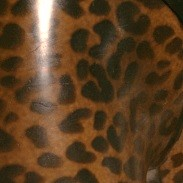 leopard latex